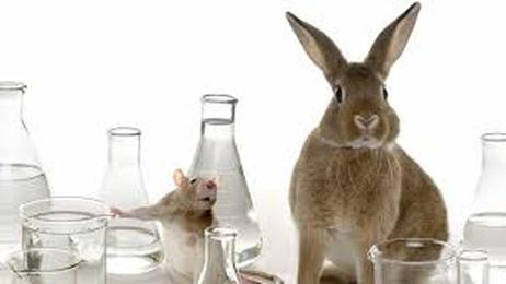 The Pros and Cons http://animal-testing.procon.org/ - Cosmetic ...